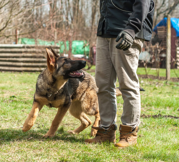 Dog bites cases lawyer in Encino and Los Angeles